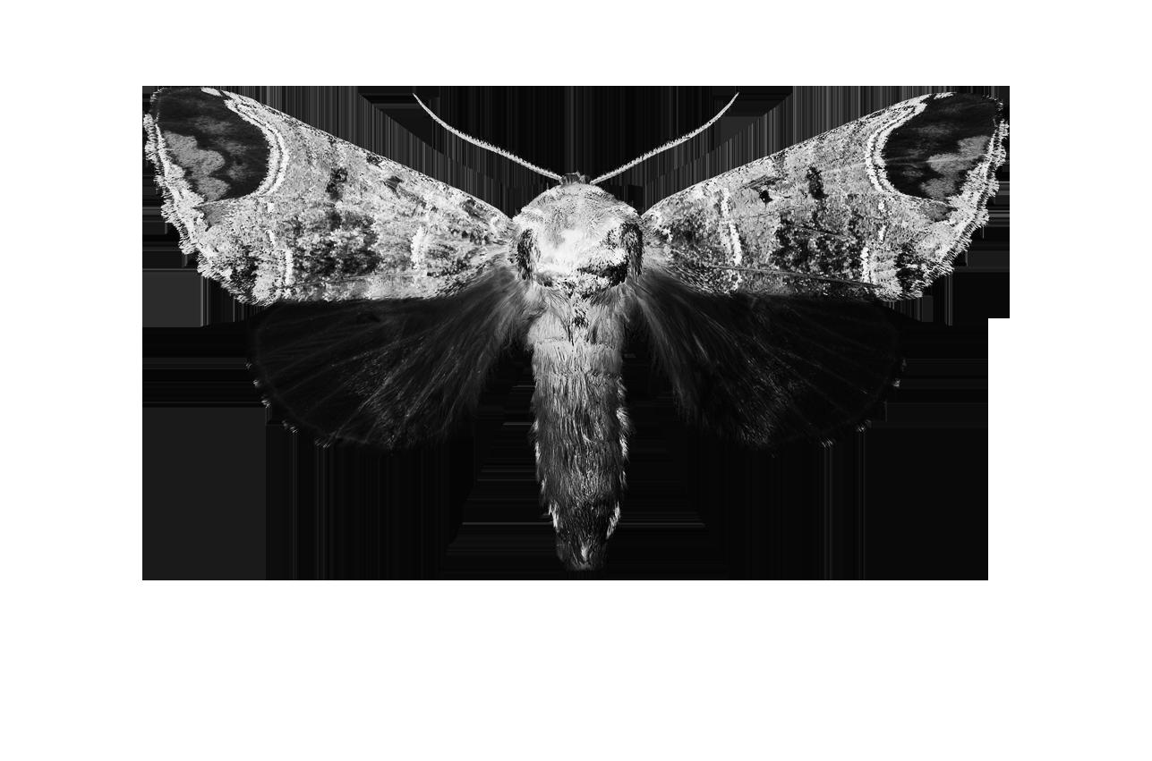 MiaWallace White